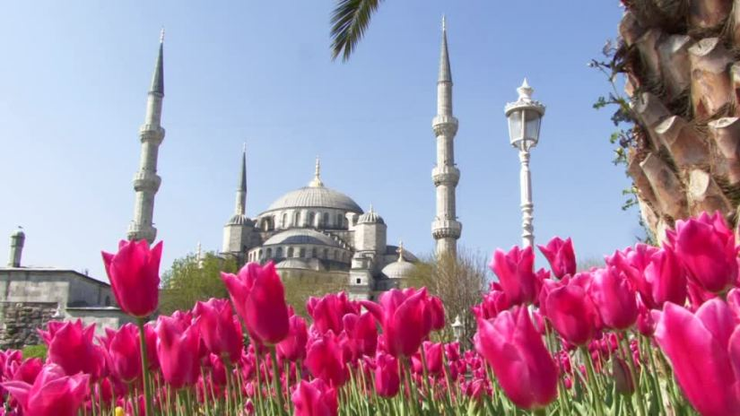 359799535-steepletop-blue-mosque-complexity-tulip